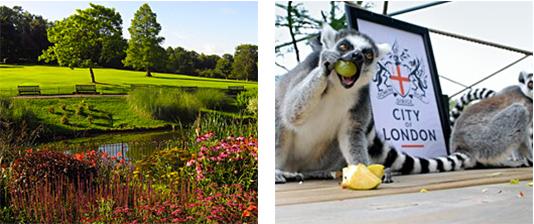 Golders Hill Park & Lemurs in Golders Hill Park