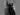 Beige Announces Ashley Graham x Marina Rinaldi